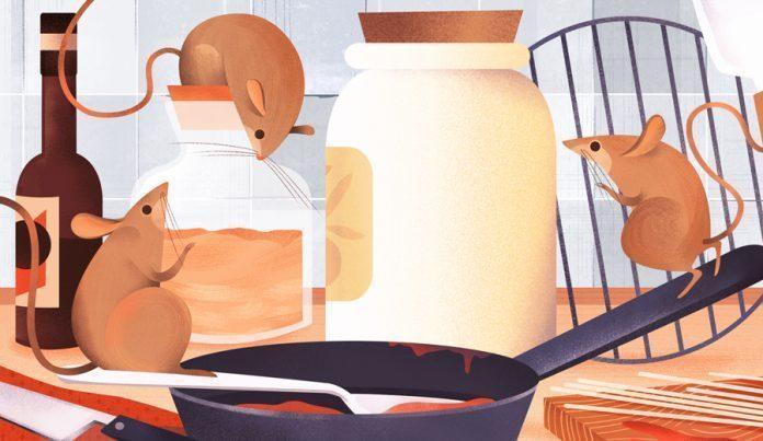 Illustration by Bee Johnson / 7356