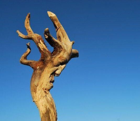 Wood Sculpture by Eudald de Juana Gorriz / Artist 11262