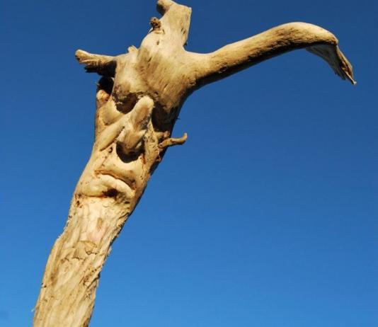 Wood Sculpture by Eudald de Juana Gorriz / Artist 11261