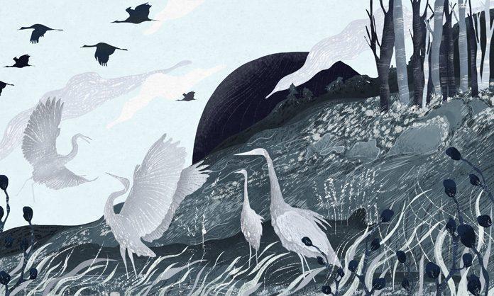 Illustration by Amalia Restrepo / 7750