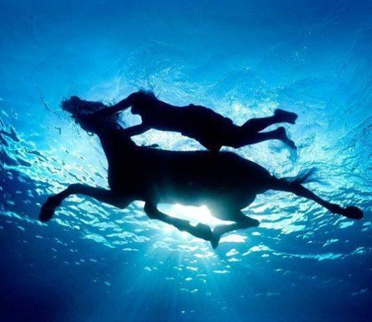 Underwater Photography by Zena Holloway / Artist 10085